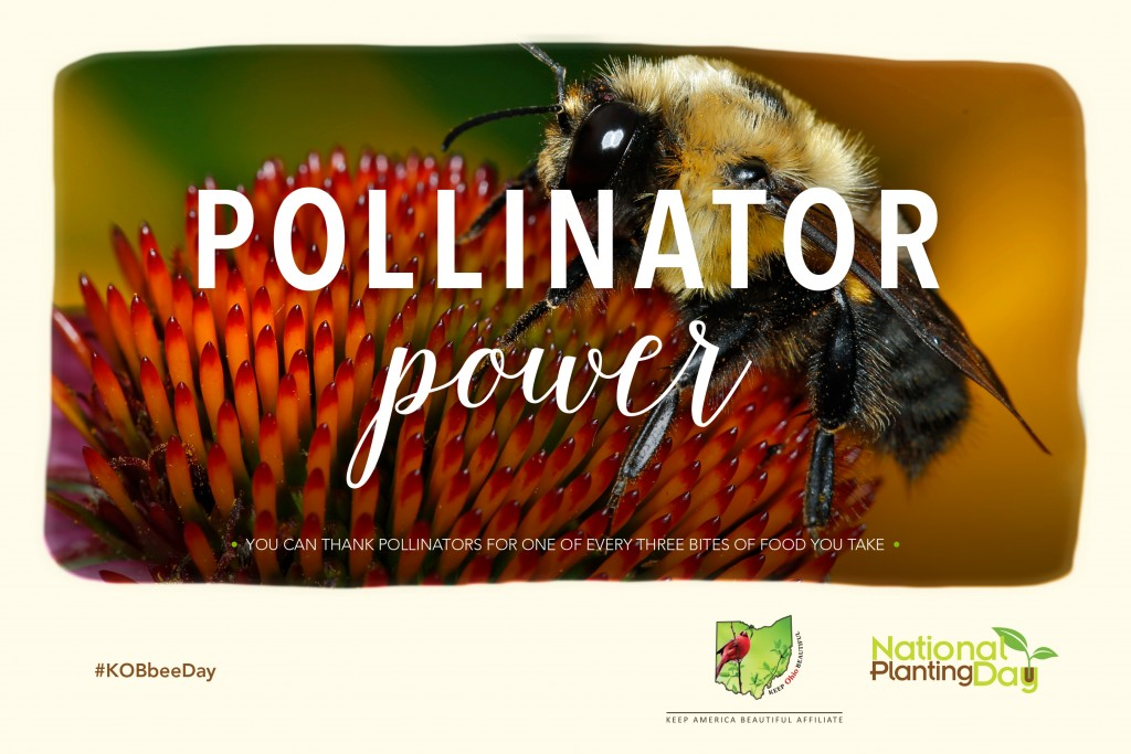 KOB Pollinator Image